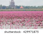 Red Lotus  Thailand  Lotus  Re...