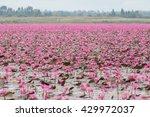 Red Lotus  Thailand  Lotus  Re...