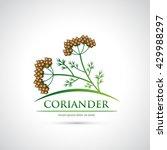 coriander symbol   vector... | Shutterstock .eps vector #429988297