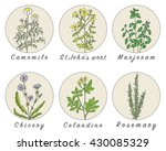 set of spices  medicinal herbs... | Shutterstock .eps vector #430085329
