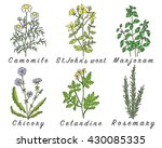 set of spices  medicinal herbs... | Shutterstock .eps vector #430085335