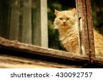Stock photo funny red fur cat sitting on window and looking at city street 430092757