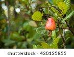 cashew tree | Shutterstock . vector #430135855