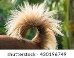 dog tail dog's rear dog cute... | Shutterstock . vector #430196749