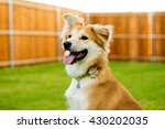 Happy Dog Sitting In Backyard
