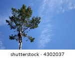 lumberjack with chainsaw on tree   Shutterstock . vector #4302037