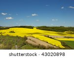 fields of rapeseed | Shutterstock . vector #43020898