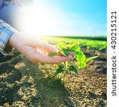 female farmer's hands in...   Shutterstock . vector #430215121