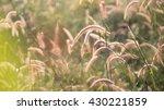 grass | Shutterstock . vector #430221859
