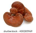 lingzhi mushroom ganoderma... | Shutterstock . vector #430285969