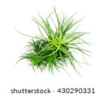 Air Plant With Scientific Name...