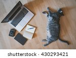 Stock photo lazy cat working concept 430293421