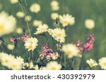 daisy flowers with beautiful...   Shutterstock . vector #430392979
