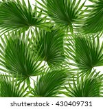 green leaves of palm tree on... | Shutterstock . vector #430409731