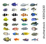 great tropical fish collection... | Shutterstock . vector #43042630