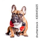 winking funny french bulldog... | Shutterstock . vector #430445605