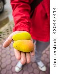 fresh colorful tropical mangoes ... | Shutterstock . vector #430447414