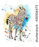 watercolor zebra on the... | Shutterstock . vector #430506475