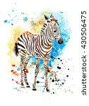watercolor zebra on the...   Shutterstock . vector #430506475