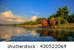 elephant herd with baby coming... | Shutterstock . vector #430522069