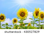 Many Yellow Flower Of The...
