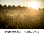 meadow at dawn with mist and... | Shutterstock . vector #430529911
