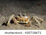 Crab On A Sand. Sand Crab. Lif...