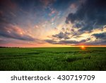green wheat field  sunset shot | Shutterstock . vector #430719709