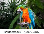 colorful macaw parrot | Shutterstock . vector #430732807