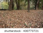 Thailand Forest In Dry Season...