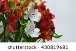 Alstroemeria   Lily Of The...