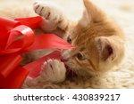 Orange Tabby Kitten Playing...