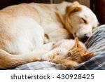 Kitten And Dog Sleeping