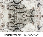 grunge and crack tree texture... | Shutterstock . vector #430929769