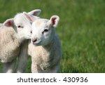 a secret  | Shutterstock . vector #430936