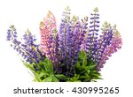 colorful flowers   lupine  on... | Shutterstock . vector #430995265