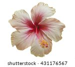 pink hibiscus isolated on white ... | Shutterstock . vector #431176567