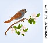 sparrow bird on a branch of an... | Shutterstock .eps vector #431208895