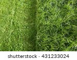 Partially Cut Grass Lawn. Part...