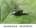 the fly on a leaf | Shutterstock . vector #431245411