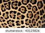Close Up Of Jaguar Or Pantera...