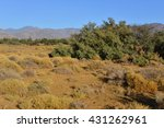 the great plains of south... | Shutterstock . vector #431262961