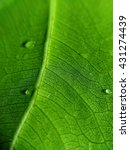 green leaf macro   leaves close ... | Shutterstock . vector #431274439