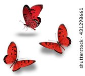 Butterfly Set  Beautiful Red...
