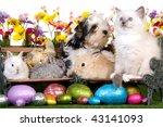 Puppy  Kitten  Bunnies  Rabbit...