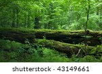 Fresh Deciduous Stand Of...
