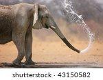 Little Elephant Spraying Water...