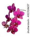 orchid flower   Shutterstock . vector #431518657