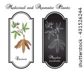 cassava  manihot esculenta   or ...   Shutterstock .eps vector #431526244