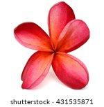 beautiful red plumeria rubra... | Shutterstock . vector #431535871